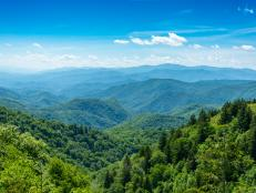 The mists of The Great Smoky Mountains seem to shroud the very secrets of the region's historical tragedies and biological triumphs.