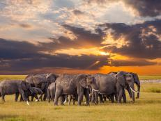 There has been a lot of not-so-great elephant news out of Africa in the last couple of decades. Between 2006 and 2015, an estimated 100,000 elephants disappeared across the continent. However, the story of the Serengeti is slightly different to other national parks in Africa. Here's some insight as to why.