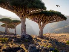 "If aliens ever visit Planet Earth, Yemen's ""Dragon's Blood Island"" is probably where they would make their first contact."