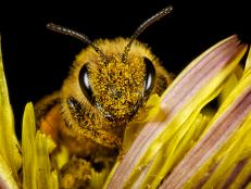 Bees are the planet's chief pollinators and possibly the most important species when it comes to plant and human survival. So the fact that they are becoming endangered due to climate change, pesticides and habitat loss should concern us all.